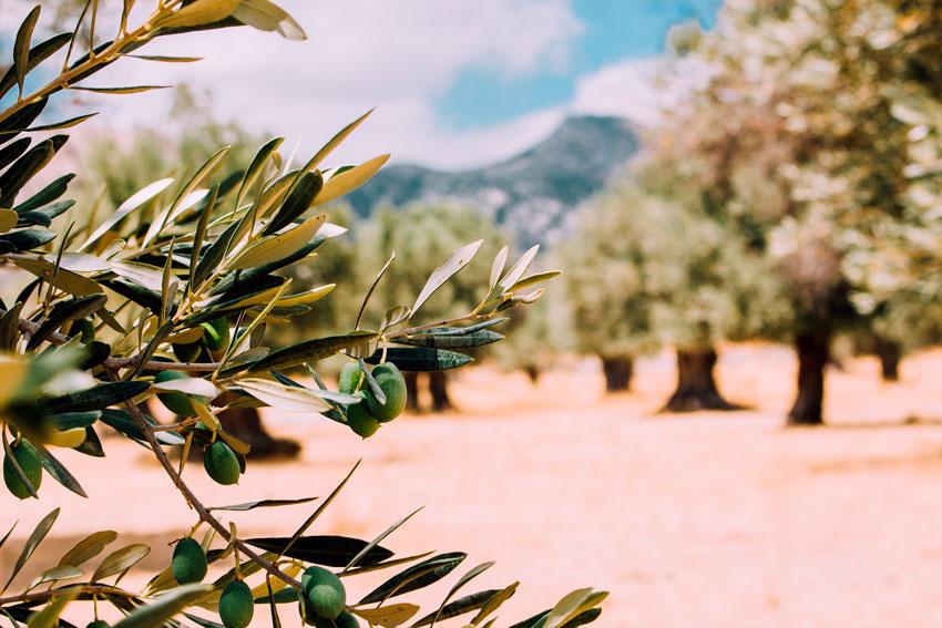 desinfectantes para agricultura - arboles