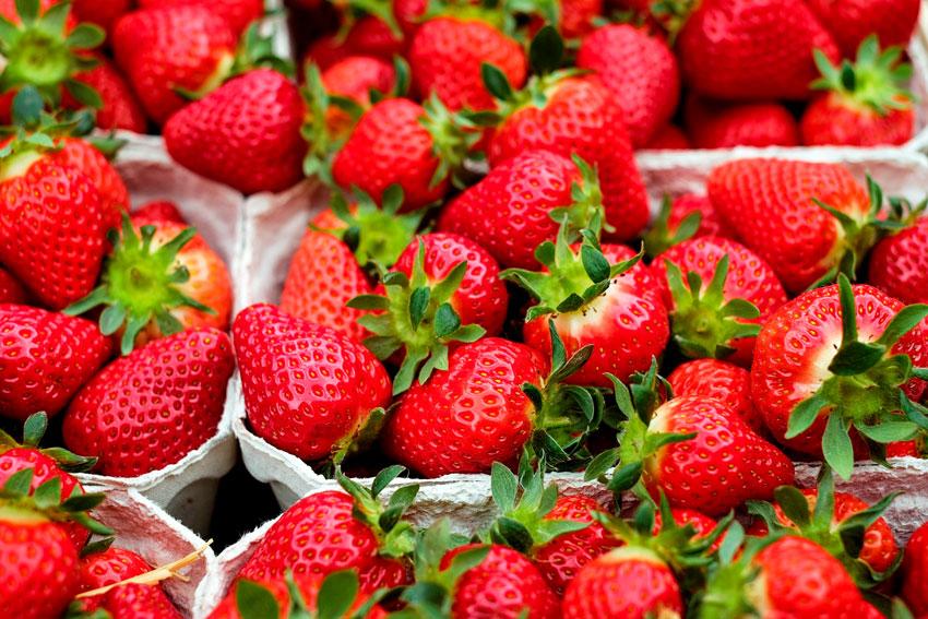 desinfectantes para agricultura - fresa