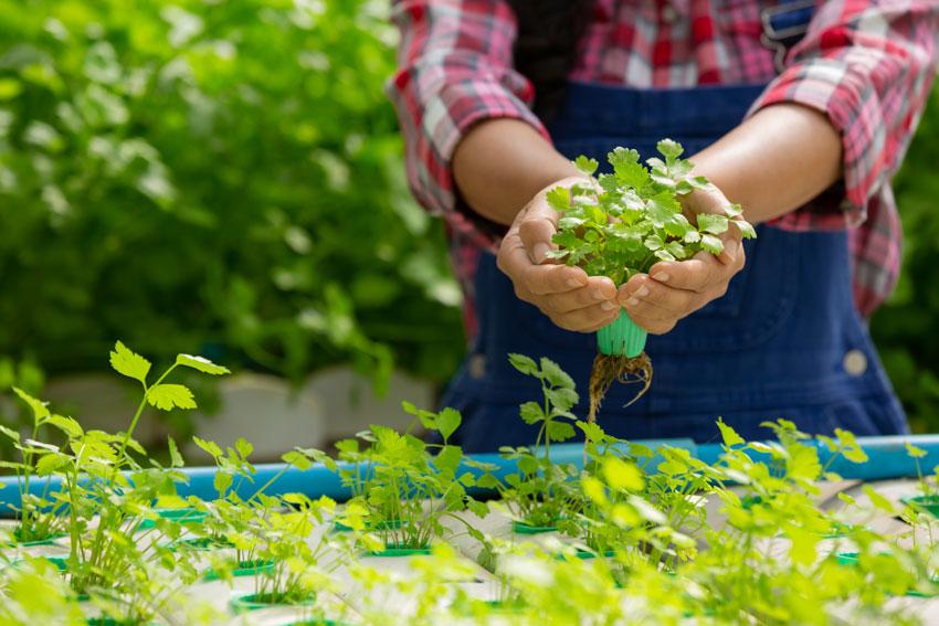 desinfectantes para agricultura - campesino