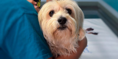 desinfectant eficaz contra covid 19 - veterinaria