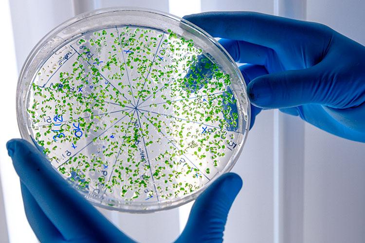 eliminar bacterias - 2