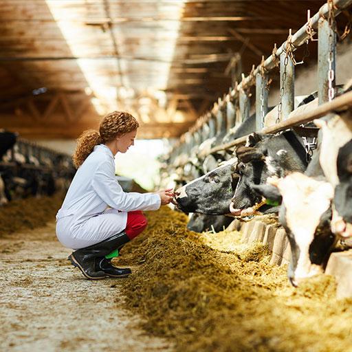 desinfectantes para agricultura y ganaderia - chica