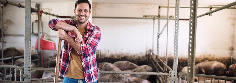 bioseguridad en granjas porcinas - slide