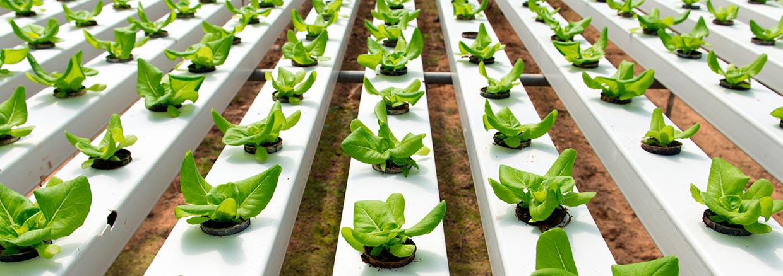 agricultura hidropónica - desinfección de invernaderos - SLIDE